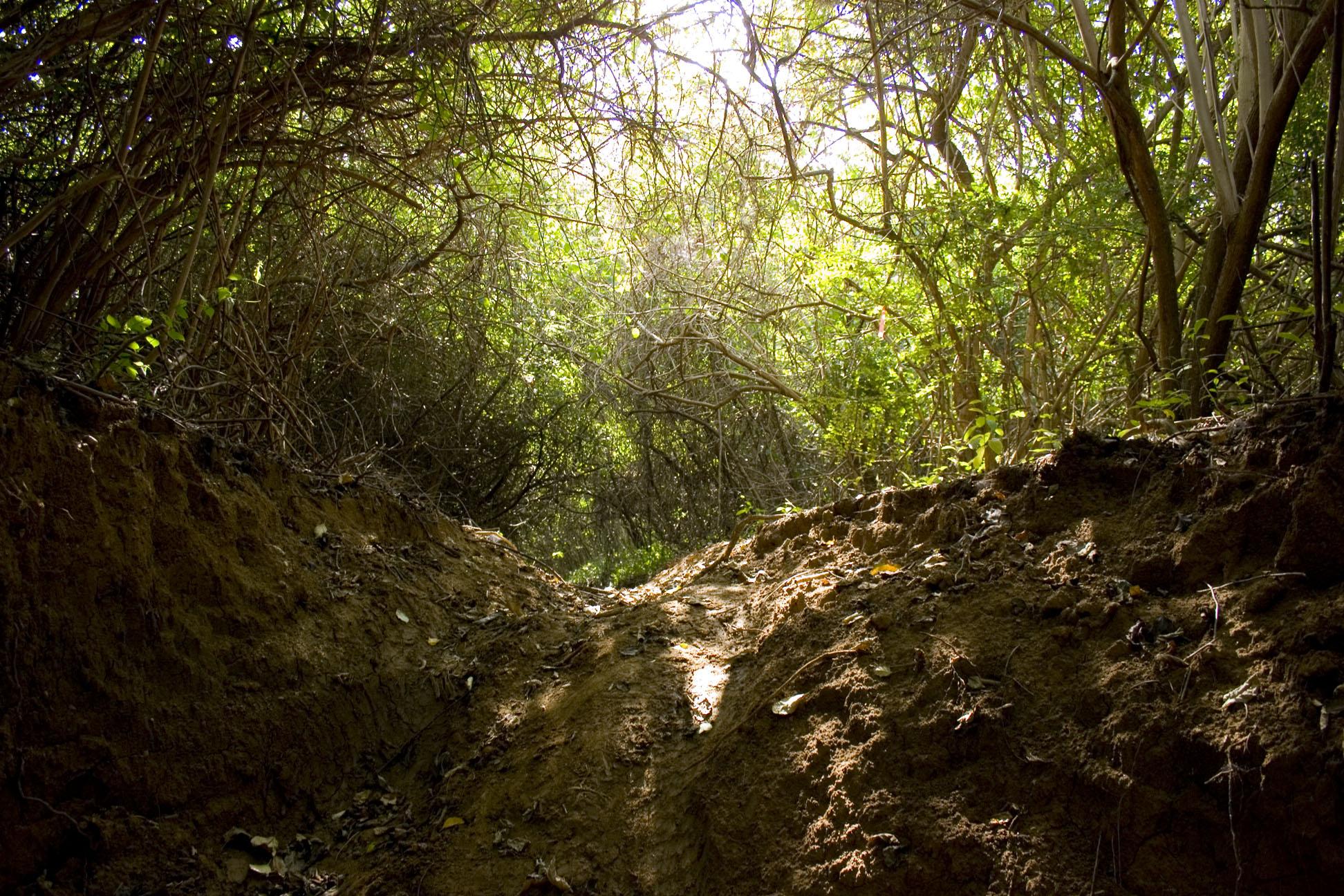 Brava Beach Trail on Culebra Puerto Rico